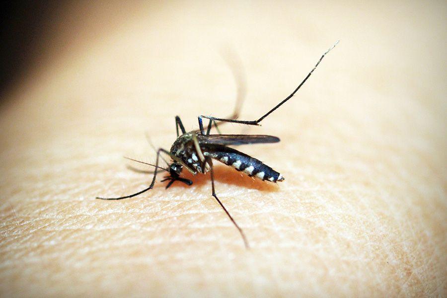 How to resist Dengue fever ?