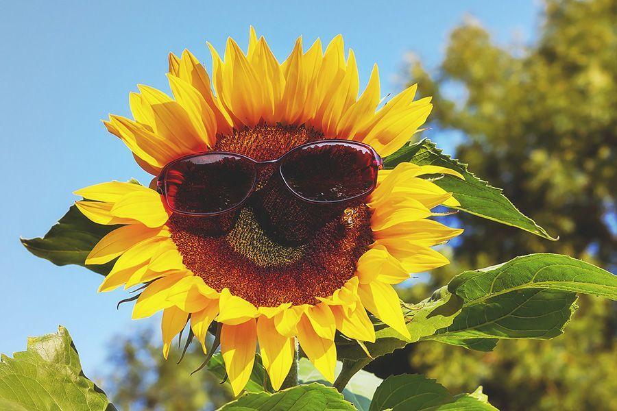 Health Summer Skin Care Sunburn Problems Solution by Dr Sri Biju