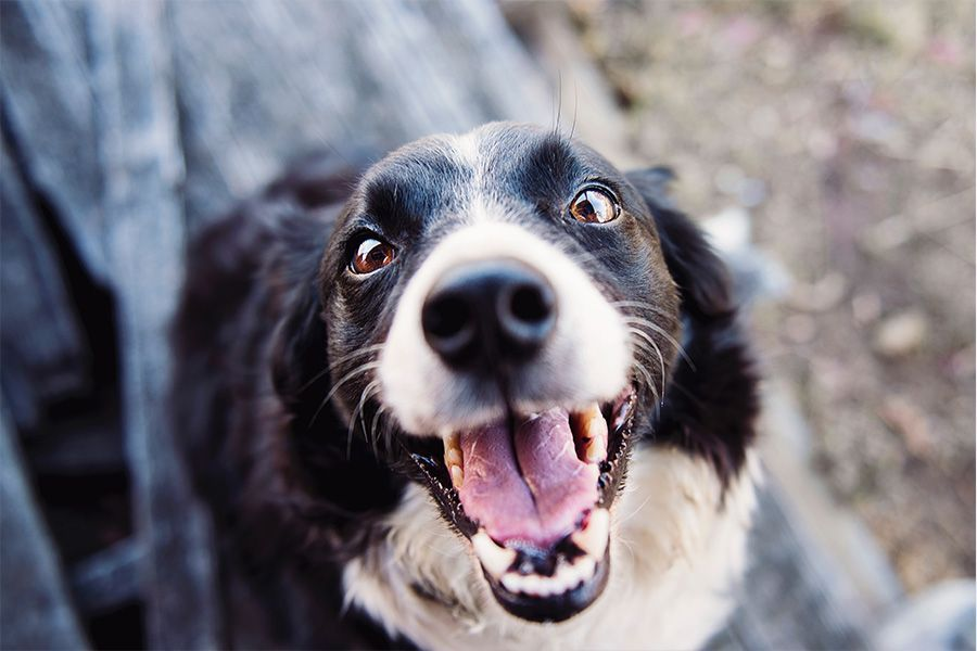 Rabies Facts and Prevention Tips