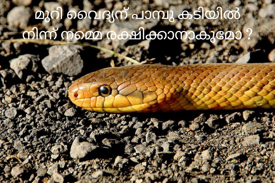 Snake Bite What to do What not to do